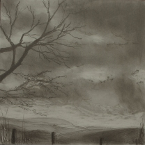 A Walk in the Woods V, Graphite on panel