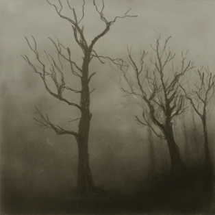 A Walk in the Woods II, Graphite on panel