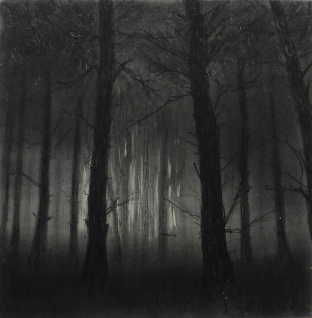 A Walk in the Woods IV, Graphite on panel