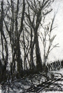 Mendip Trees, Oil on paper