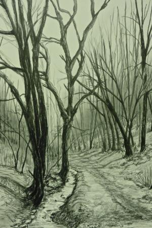 Rowberrow Woods II