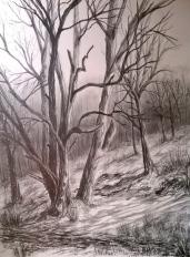 Rowberrow Woods I.jpg