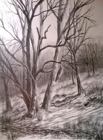 Rowberrow Woods