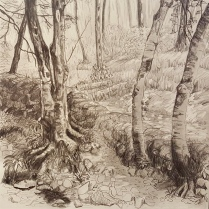 'A Walk in the Woods' Series 2, Graphite